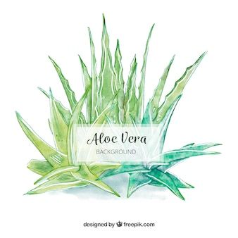 Aloe vera background de aguarela