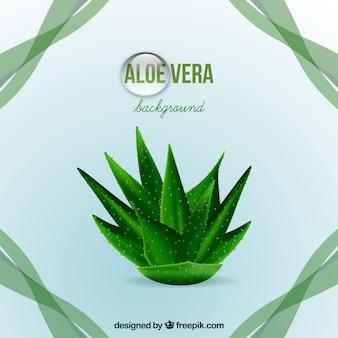 Aloe vera background