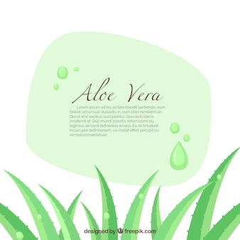 Aloe vera banner illustration