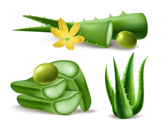 Aloe vera em um estilo realista para cuidar da pele