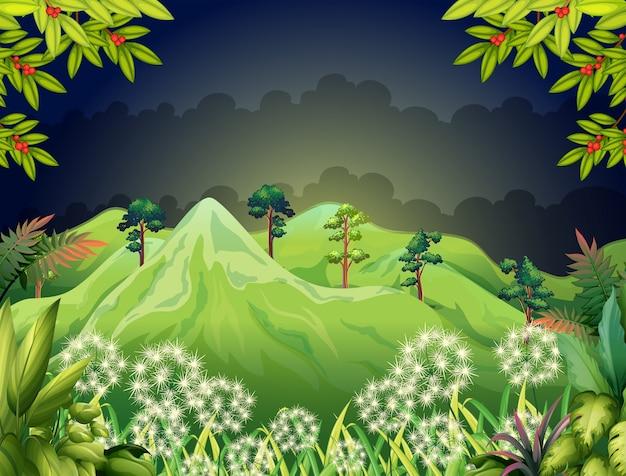 Altas montanhas na floresta escura