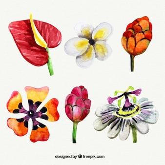 Amável da aguarela de flores exóticas