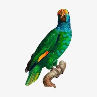 Amazônia de dufresne