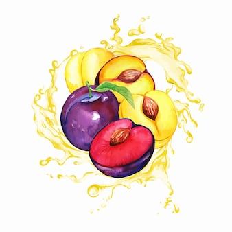 Ameixas roxas e amarelas de jardim no respingo de suco amarelo