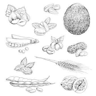 Amendoim e avelã saudáveis, grãos de café e coco integral, pistache e amêndoa, vagem de ervilha e nozes, feijão e espigas de trigo, sementes de girassol.