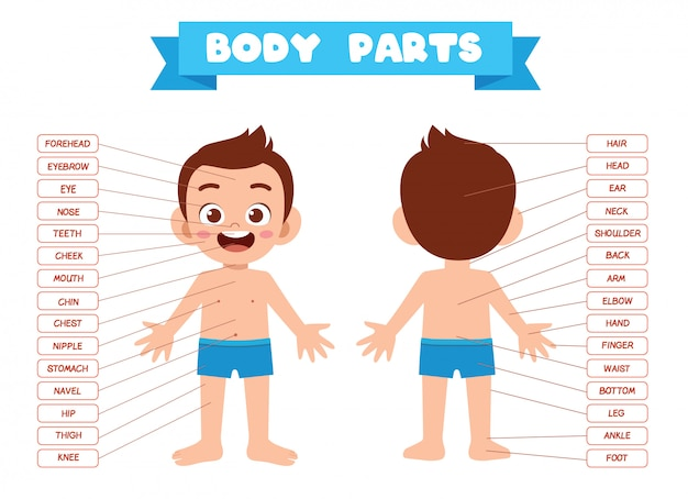 Anatomia de parte do corpo feliz garoto garoto bonito
