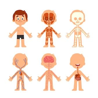 Anatomia do corpo de menino dos desenhos animados
