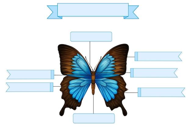 Anatomia externa de uma planilha de borboleta