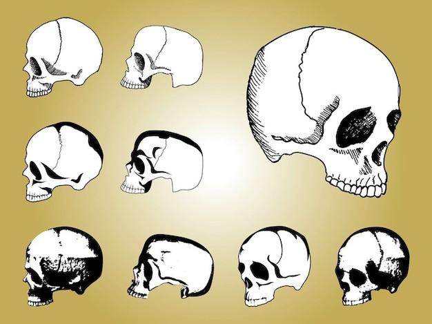 Anatomia mão crânios humanos atraídos