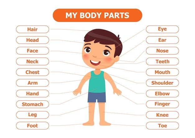 Anatomia para crianças.