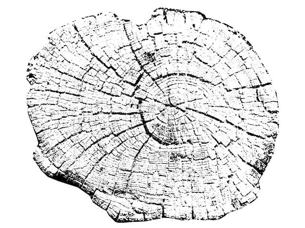 Anéis de crescimento de árvores. madeira de corte natural. seção transversal de uma árvore. crescimento da árvore. estrutura de madeira. ilustração vetorial.