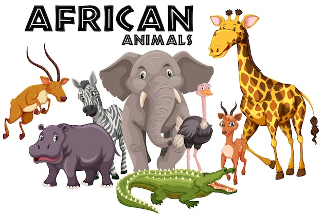 Animais africanos no fundo branco