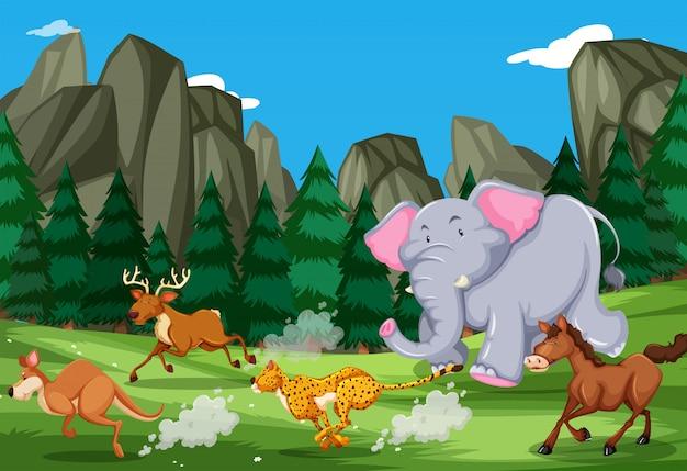 Animais correm na natureza