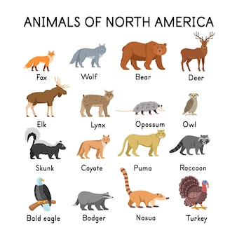 Animais da américa do norte raposa lobo urso veado alce skunk lince gambá coruja coiote puma guaxinim águia careca texugo nasua peru em um fundo branco ilustração plana dos desenhos animados para crianças
