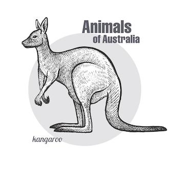 Animais da austrália canguru.