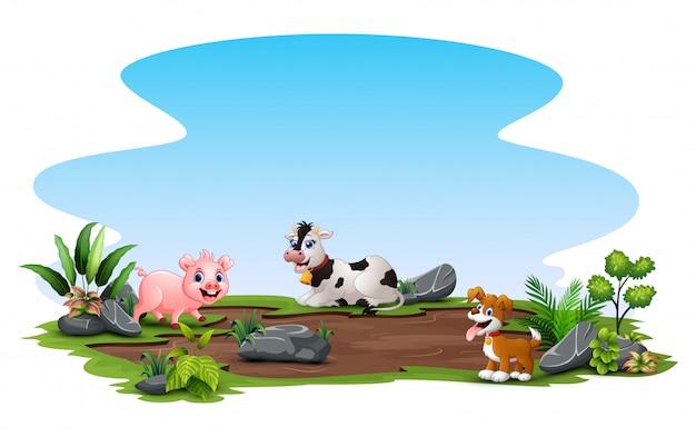 Animais da fazenda curtindo a natureza lá fora