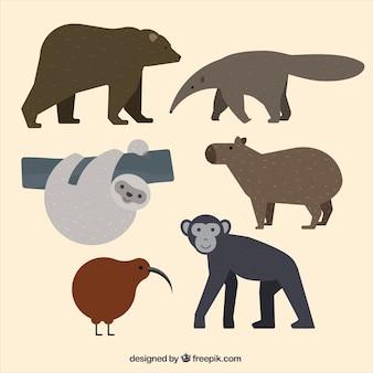 Animais da floresta desenhados mão