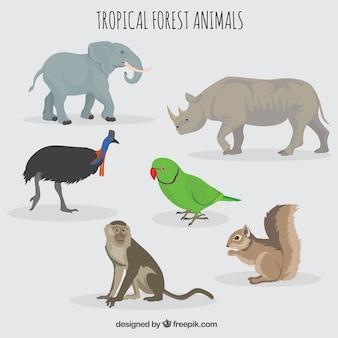 Animais da floresta e selvagens
