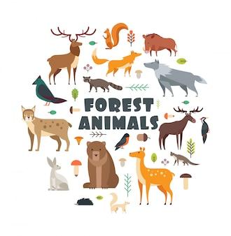 Animais da floresta selvagem e pássaros dispostos em círculo.