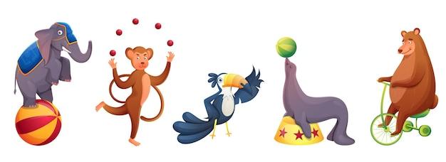Animais de circo fazendo apresentações de vários tipos