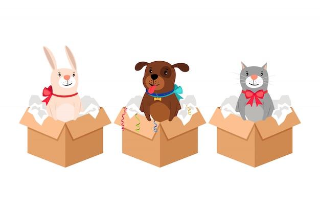 Animais de estimação em caixas
