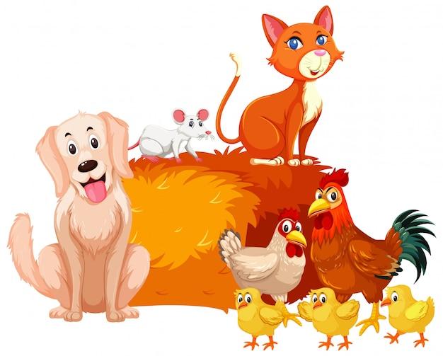 Animais de fazenda com galinhas e outros animais de estimação