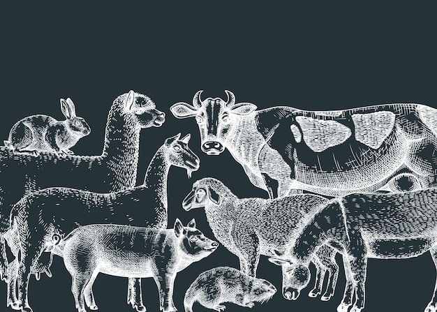 Animais de fazenda desenhados à mão com ilustrações vetoriais em um quadro-negro