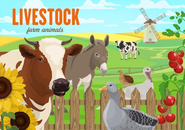 Animais de fazenda, gado e aves