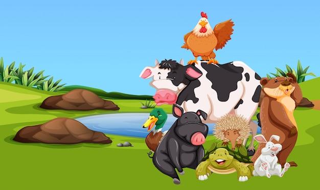 Animais de fazenda no pátio