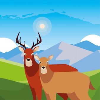 Animais de veado em uma paisagem natural