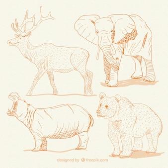 Animais desenhados mão