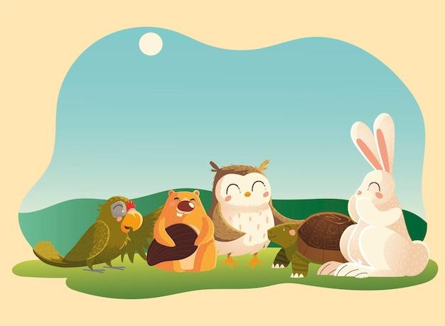 Animais dos desenhos animados castor coelho coruja papagaio e tartaruga na grama