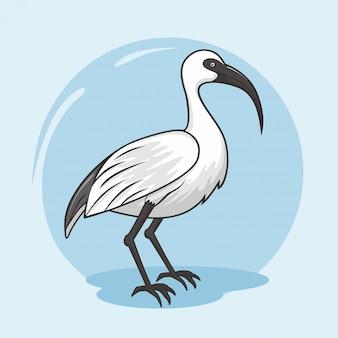 Animais dos desenhos animados do pássaro ibis