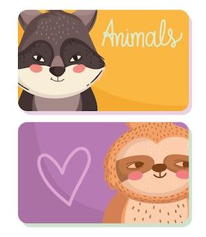 Animais guaxinim preguiça