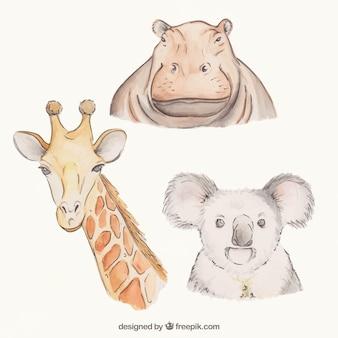 Animais impressionantes desenhados à mão