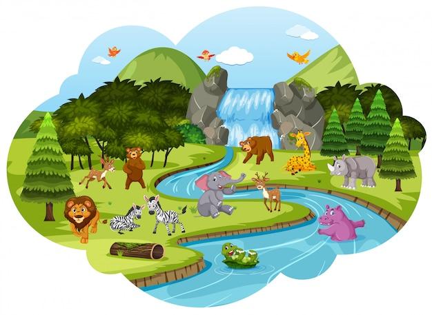 Animais na cena da floresta