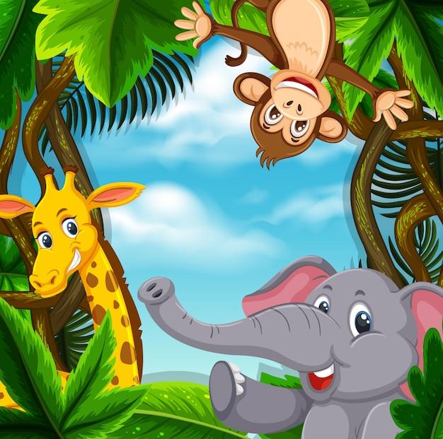Animais na selva