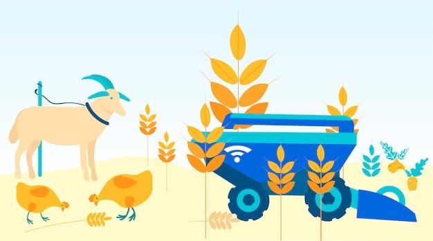 Animais no campo. máquina de colheita limpa o campo.