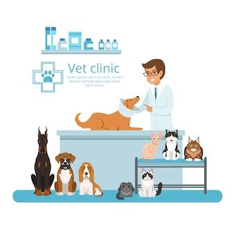 Animais no gabinete do hospital veterinário. ilustração vetorial