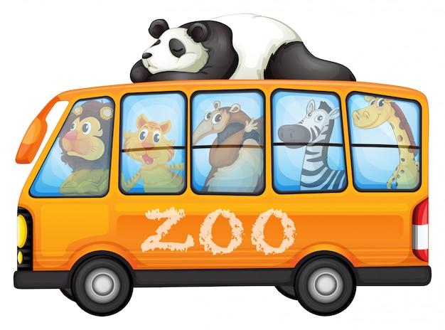 Animais no ônibus