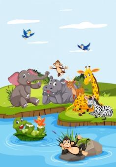 Animais selvagens ao lado do rio