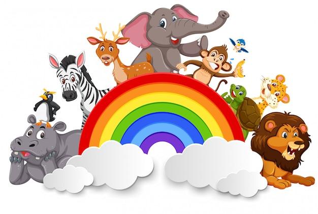 Animais selvagens e modelo de arco-íris