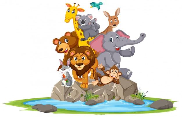 Animais selvagens em pé na pedra dos desenhos animados em branco