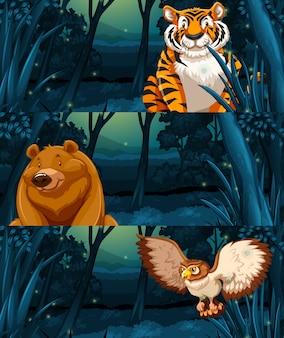 Animais selvagens na floresta à noite