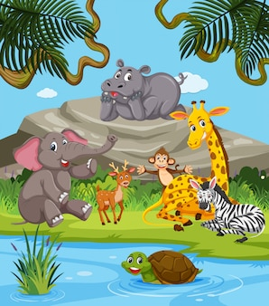 Animais selvagens na natureza