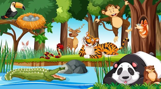 Animais selvagens na selva
