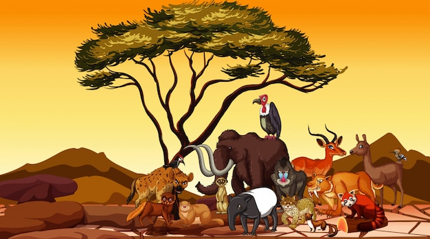 Animais selvagens no campo do deserto