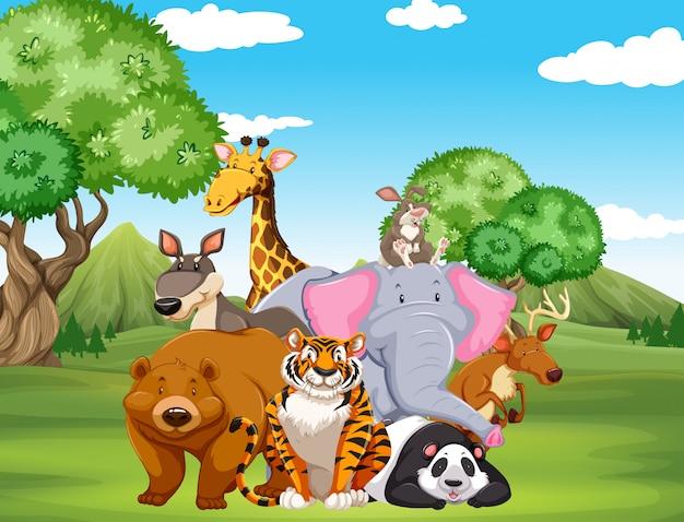 Animais selvagens no campo