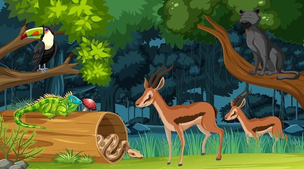 Animais selvagens no fundo da paisagem da floresta