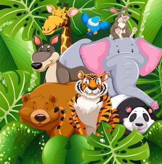 Animais selvagens no mato